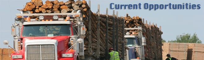 forestry-career-opportunities